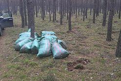 Szczecin. Chcieli ukraść mech. Lasy Państwowe publikują zdjęcia