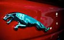 Na Jaguarach świat się nie kończy. Polski dealer wypłaci dywidendę i rozgląda się za innymi markami