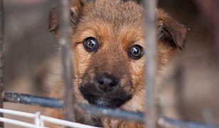 #AAVivaKarma wspiera zwierzaki