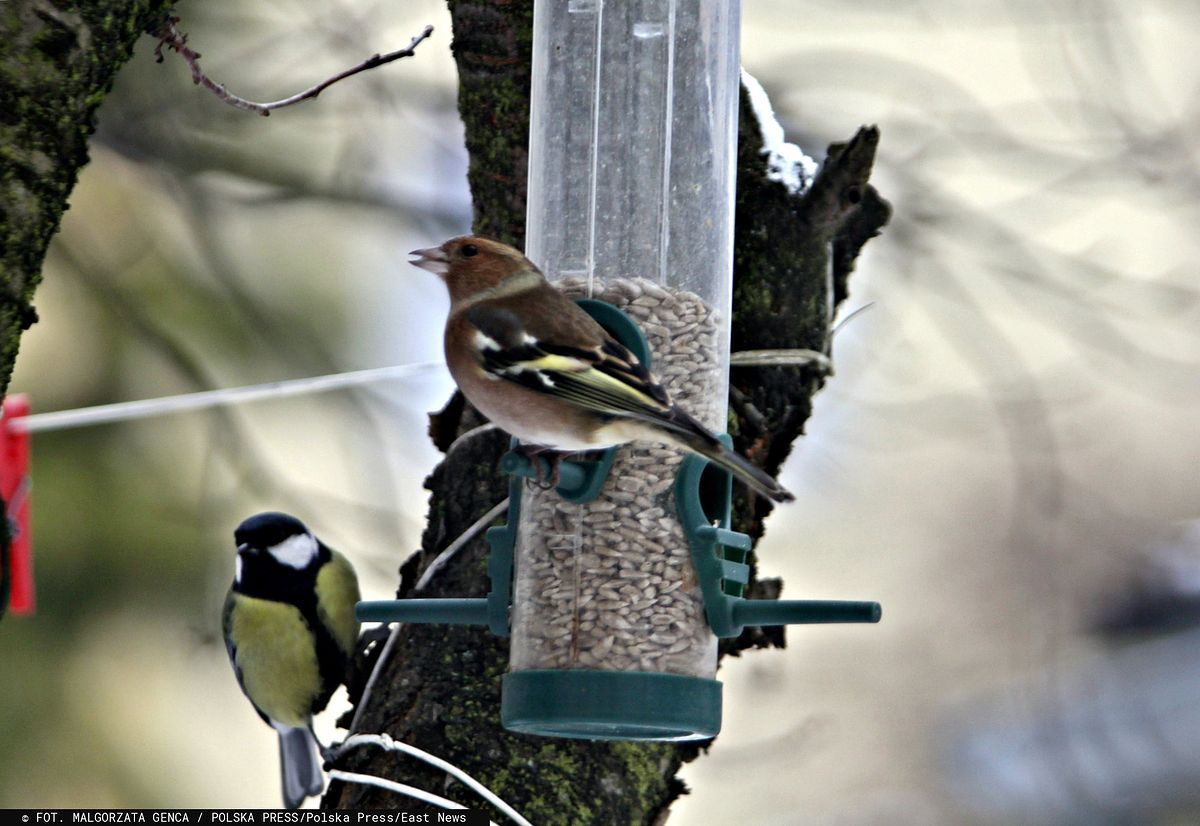 Dokarmianie ptaków w zimę. Ratunek dla ich życia czy niebezpieczna gra z prawami natury?