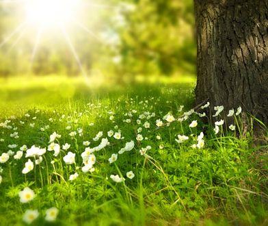Wiosna 2019. Kiedy rozpocznie się kalendarzowa wiosna? Czym się różni od astronomicznej? Jakie są pierwsze oznaki wiosny?
