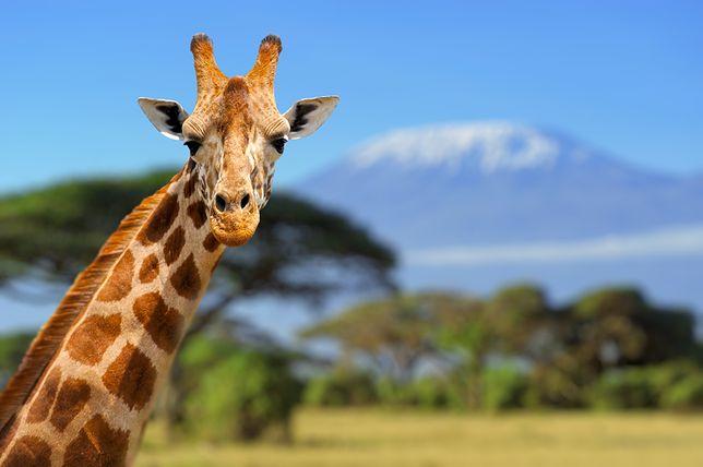 Kenia – tego mogłeś nie wiedzieć