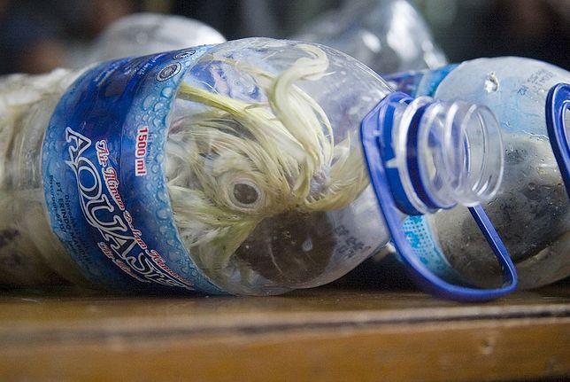 Przemyt papug w plastikowych butelkach to spory problem w Indonezji