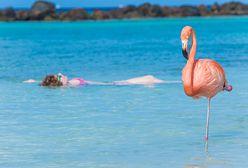 Nietypowe plaże. Tutaj spotkasz świnie, flamingi czy żółwie