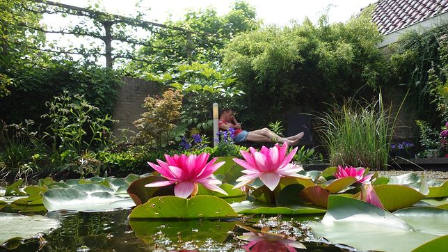 Oczko wodne to doskonała dekoracja ogrodu