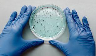 Naukowcy odkryli prehistoryczne wirusy. Mają 15 tysięcy lat. Są groźne dla ludzi?