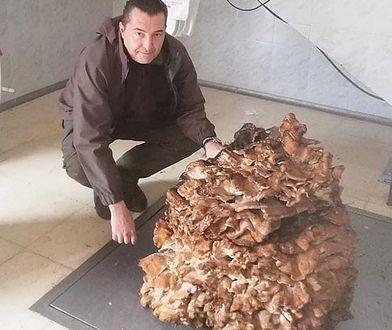 Grzyb waży niemal 70 kg