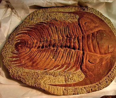 Odkrycie sprzed 450 mln lat. Nowe badania ujawniły niesamowite fakty
