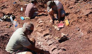 Niezwykłe odkrycie. To mógł być największy dinozaur w dziejach