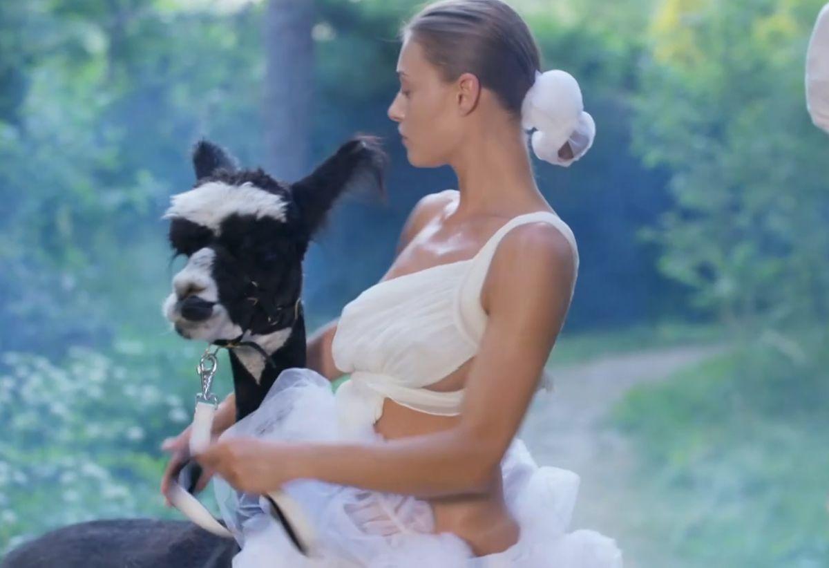 """Sesja zdjęciowa z alpakami w """"Top Model"""" wywołała lawinę krytyki"""