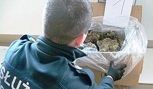 Służby udaremniły wielki przemyt żywej rafy koralowej