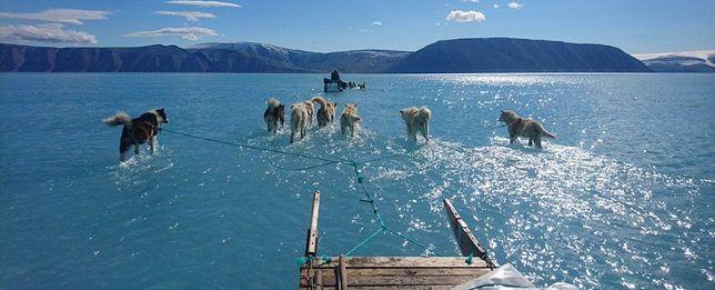 Badacz z Arktyki Steffen Olsen wraz z psami próbuje odzyskać sprzęt meteorologiczny