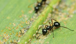 Sposoby na mrówki w ogrodzie