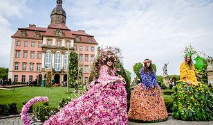 Wszyscy spacerujący po zamku i tarasach z pewnością spotkają nie tylko Panie Wiosny w sukniach z kwiatów, ale również i Księżną Daisy, która zainicjowała Festiwal Kwiatów i Sztuki