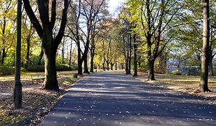 Remont alei obwodnicowej w Parku Skaryszewskim