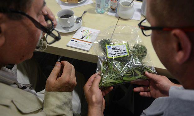 USA: 9 stanów w dniu wyborów głosowało ws. legalizacji marihuany