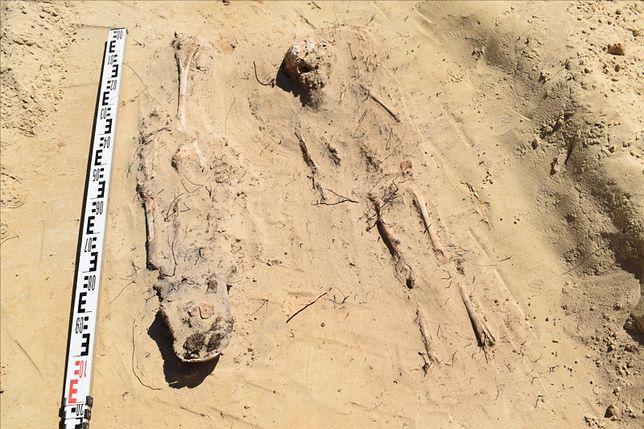 Archeolodzy trafili na groby podczas budowy S19.