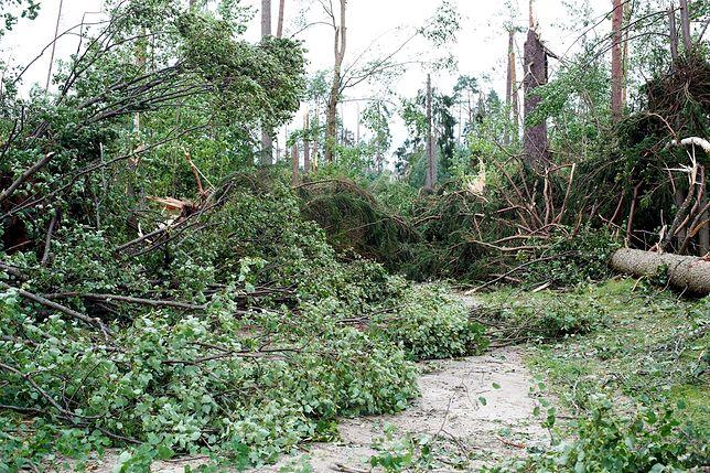 Zniszczony przez nawałnicę las i droga w Suszku