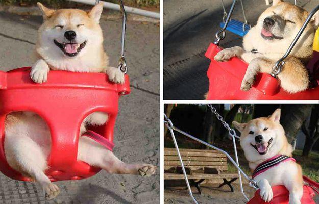 Czy to najszczęśliwszy pies na świecie?