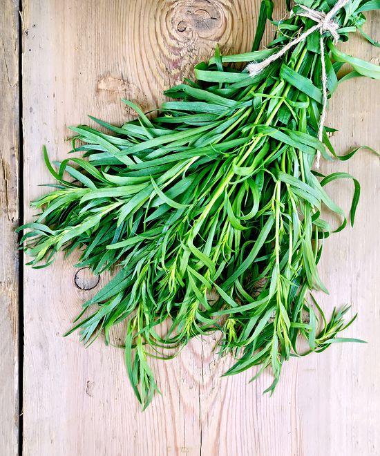 Estragon - właściwości i zastosowanie rośliny