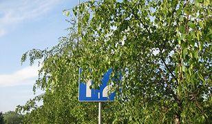 Zgłaszajmy zasłonięte znaki drogowe