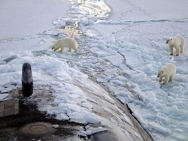 Lody Arktyki topnieją w rekordowym tempie