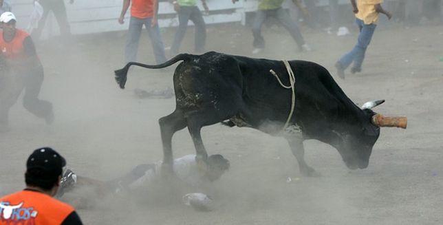 Takie walki z bykiem usatysfakcjonują obrońców praw zwierząt