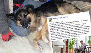 Wielka akcja poszukiwania domu dla Rexa! Jego właściciel trafił do hospicjum