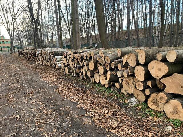 Drzewa, które zostały wycięte na terenie Westerplatte
