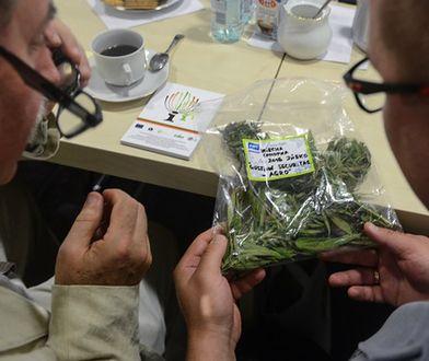 Medyczna marihuana czeka na legalizację