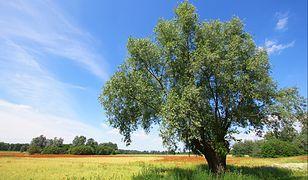 Pogoda na dziś — środa 31 lipca. Prognoza dla Warszawy, Gdańska, Wrocławia i innych. Sprawdź, gdzie będzie burza, a gdzie zaświeci słońce