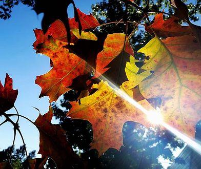 Pogoda dopisała. Jesień na Waszych zdjęciach wygląda fantastycznie