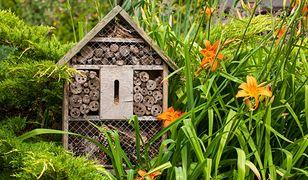 Jak zrobić hotel dla owadów? Pomóż przezimować cennym gościom ogrodu