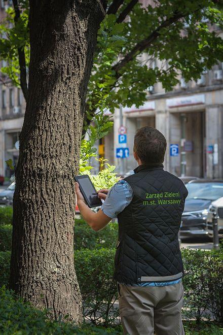 Warszawa. Trwa inwentaryzacja drzew