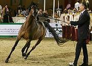 Skonfiskowany koń wygrywa pieniądze dla skarbówki