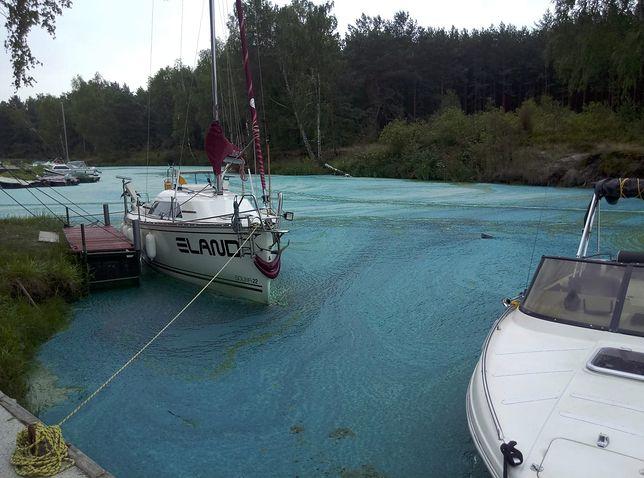 Smród i 5-centymetrowy kożuch z sinic - tak wygląda port jachtowy Tresta na Zalewie Sulejowskim w Łódzkiem