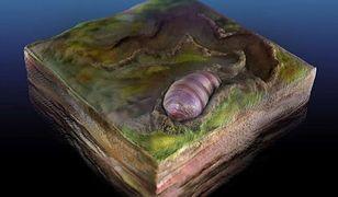 Naukowcy natrafili na skamielinę przodka wszystkich zwierząt