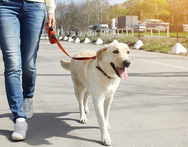 Spór o spacer z psem. Konflikt musiał rozwiązać sąd