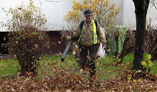"""Warszawa zakazuje używania dmuchaw do sprzątania liści. """"W końcu! To najgorszy wynalazek"""""""