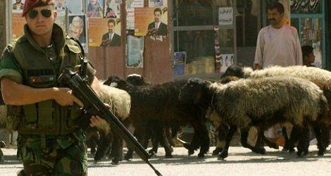 Oni są odporni na wojenny stres w Afganistanie