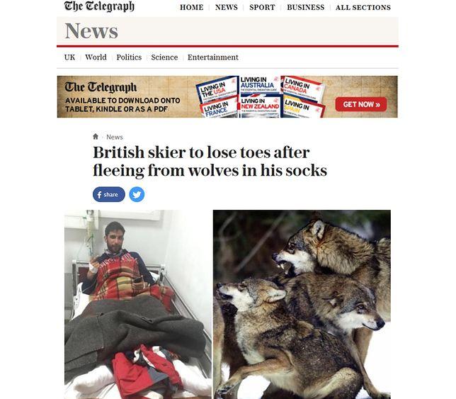 Narciarz uciekał w skarpetkach przed wilkami. Spędził noc na drzewie, bojąc się o własne życie