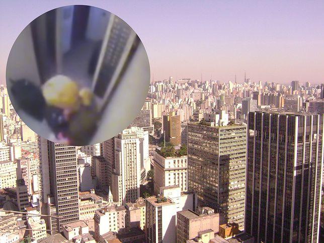 Sao Paulo. Na światło dziennie ujrzały nagrania z monitoringu