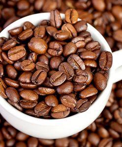 Czy kawa jest zdrowa? Wszystko, co warto wiedzieć o kawie