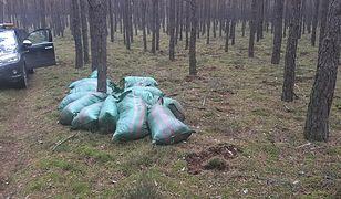 Strażnicy Leśni znaleźli 16 worków z mchem