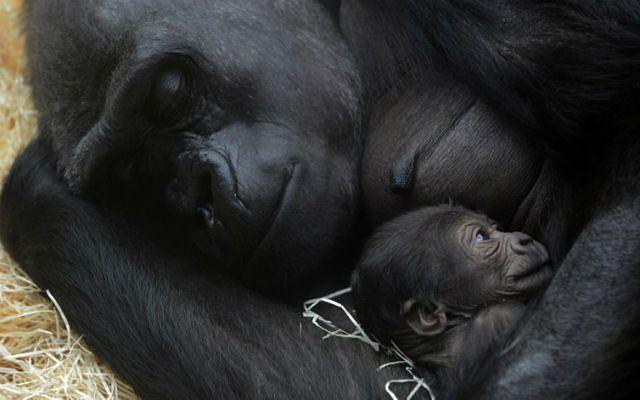 Praskie zoo ma nowego mieszkańca - zobacz zdjęcia