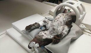 Opinia biegłych ws. skatowanego psa Fijo. Bartosz D. nie mógł upaść na szczeniaka, jest akt oskarżenia