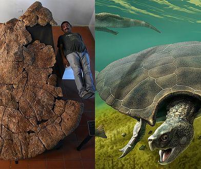 Jest to jeden z największych żółwi, jaki kiedykolwiek istniał. Stupendemys to drugi co do wielkości znany przypadek