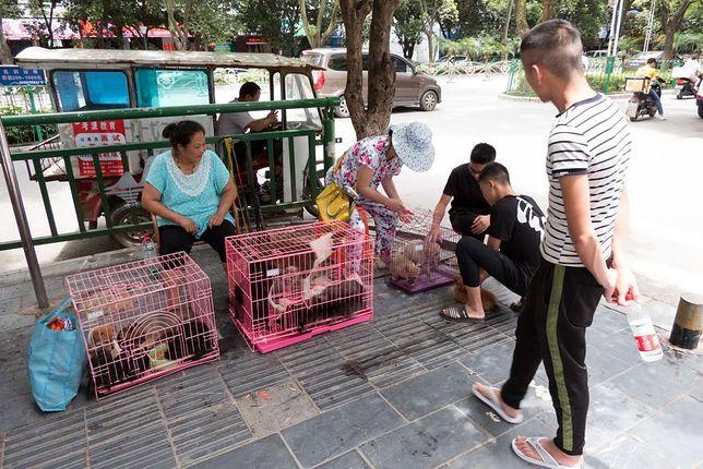 """""""Psy będą uznawane za zwierzęta domowe, a nie część inwentarza"""" - informują obrońcy praw zwierząt"""