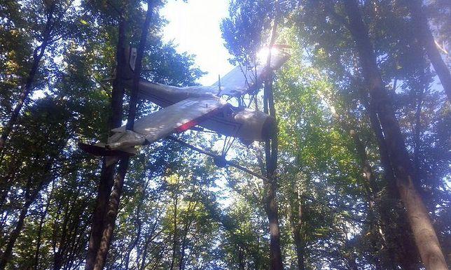 Samolot zawieszony w koronach drzew znaleziono w połowie września nieopodal Ustrzyk Dolnych