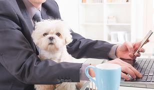 Pomysłodawcy akcji przekonują, że obecność psa w biurze to same korzyści